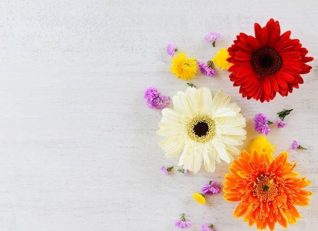 Flores frescas de primavera gerbera colorido e flor vários em madeira branca