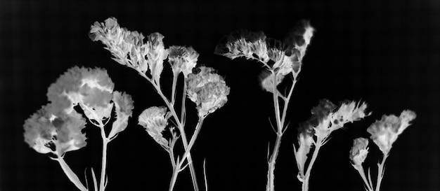 Flores frescas em efeito negativo