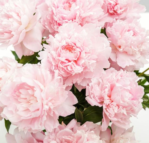 Flores frescas lindas peônia