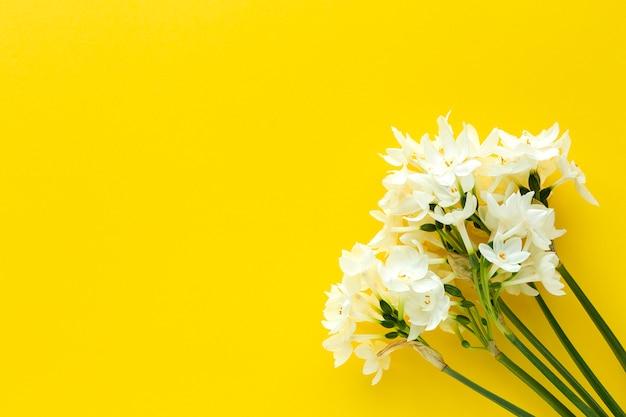 Flores frescas na cor de fundo de cima