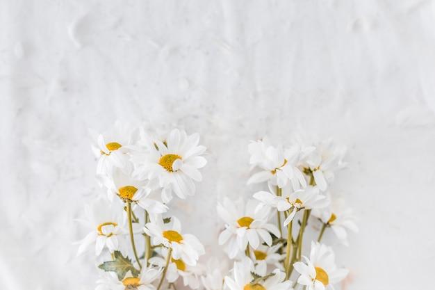 Flores frescas perto de penas em têxteis