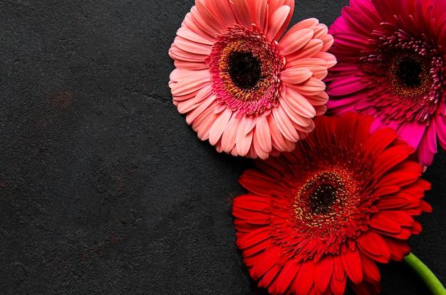 Flores gerbera brilhantes em fundo preto