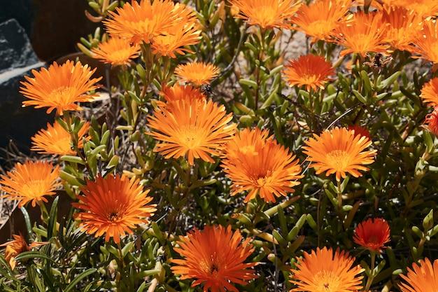 Flores laranja e amarelas