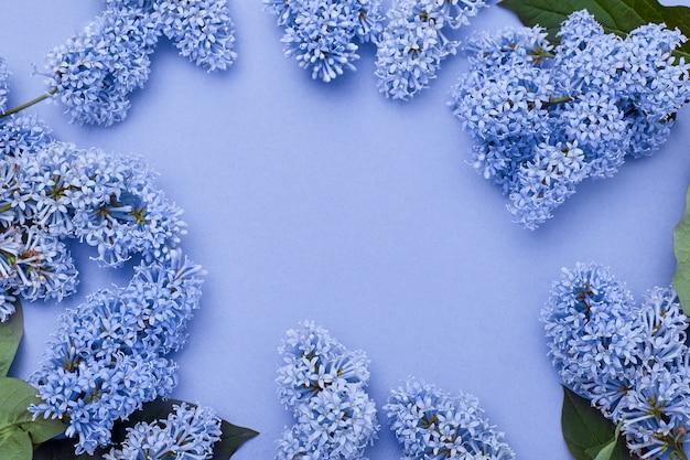Flores lilás, deitado no fundo azul