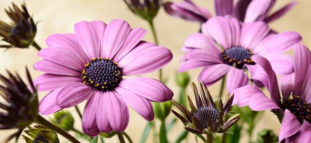 Flores lilás em bege
