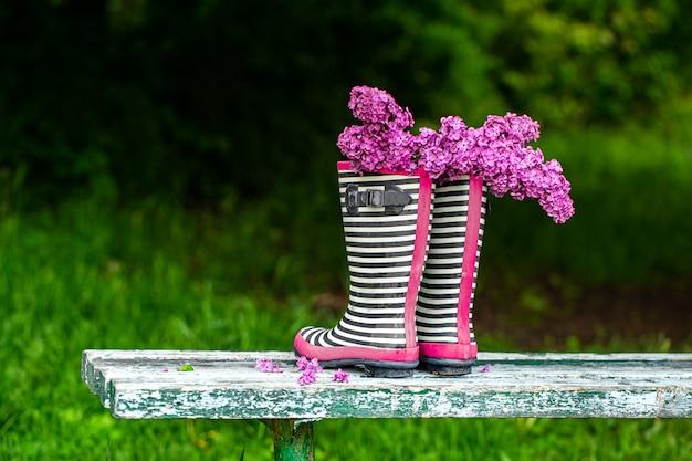 Flores lilás em botas de borracha listradas. composição criativa de primavera.