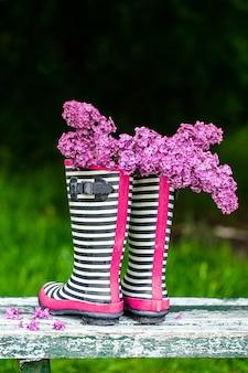 Flores lilás em botas de borracha listradas na grama. composição criativa de primavera.