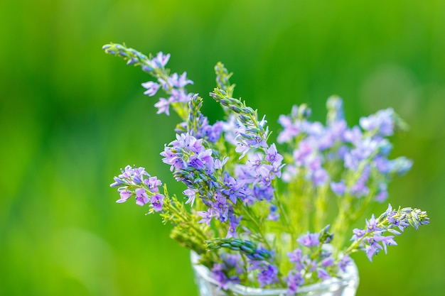 Flores lilás em um vaso close-up em um fundo natural