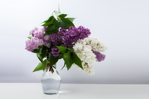 Flores lilás em vaso de vidro sobre fundo branco