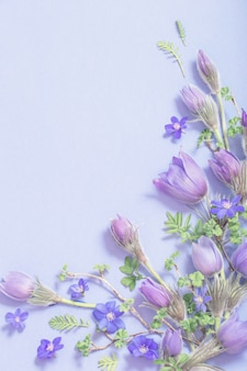 Flores lindas da primavera em fundo azul