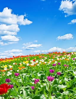 Flores lindas da primavera