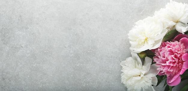 Flores lindas peônias brancas, roxas e rosa em um cinza claro