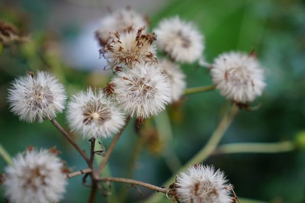 Flores macias selvagens na floresta.