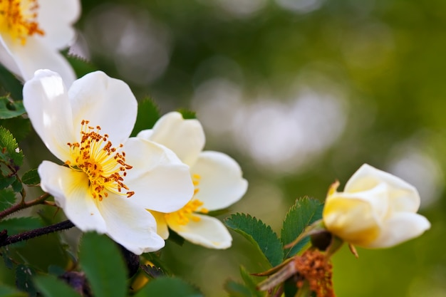 Flores mais curtas com espaço de cópia