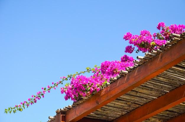 Flores maravilhosas encontradas na grécia na ilha