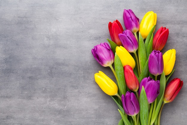 Flores multicoloridas da primavera, tulipa em um fundo cinza.