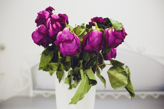 Flores murchas da rosa do rosa na lata molhando no fundo de madeira branco e azul com tom do vintage, vintage aumentou.