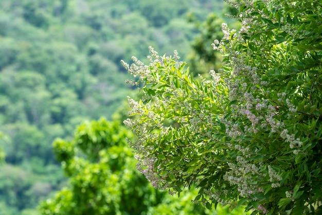 Flores na floresta