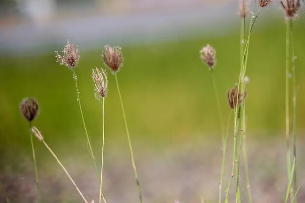 Flores na grama aberta. fundo natural