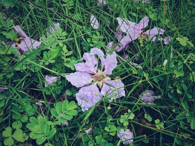 Flores na natureza