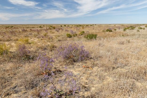 Flores nas estepes, paisagem do cazaquistão.