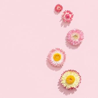 Flores naturais secas, pequena flor rosa