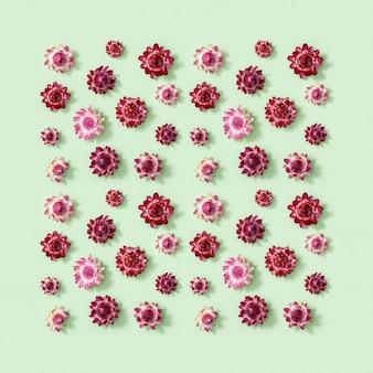 Flores naturais secas, pequena flor vermelha