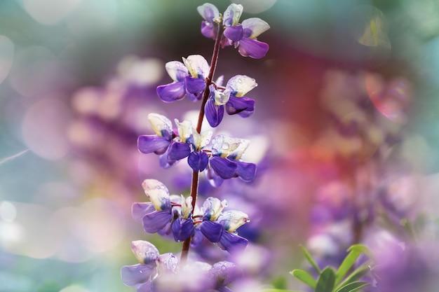Flores no alasca