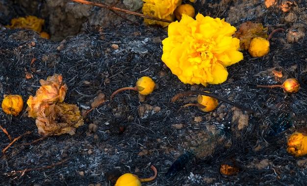 Flores no chão coberto de sooth