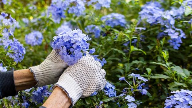 Flores no jardim da casa