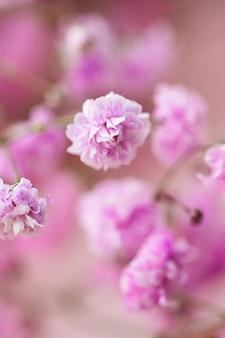 Flores no jardim de beleza floral e fundo botânico para convite de casamento e conceito de natureza e meio ambiente de cartão comemorativo