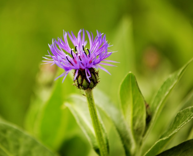Flores no jardim dia de verão, close-up