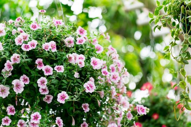 Flores no jardim.