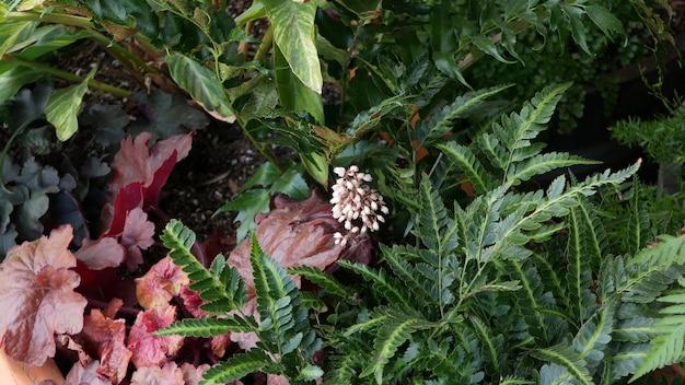 Flores ornamentais no jardim, jardinagem doméstica na califórnia, eua. floricultura botânica decorativa. a flora desabrocha, as cores das plantas suculentas.