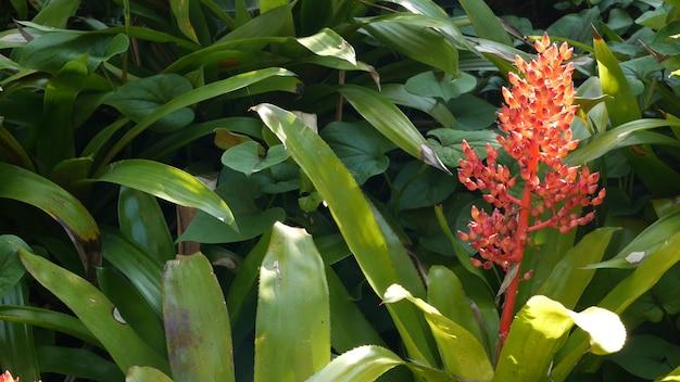 Flores ornamentais no jardim, jardinagem na califórnia, eua. floricultura botânica. flor da flora