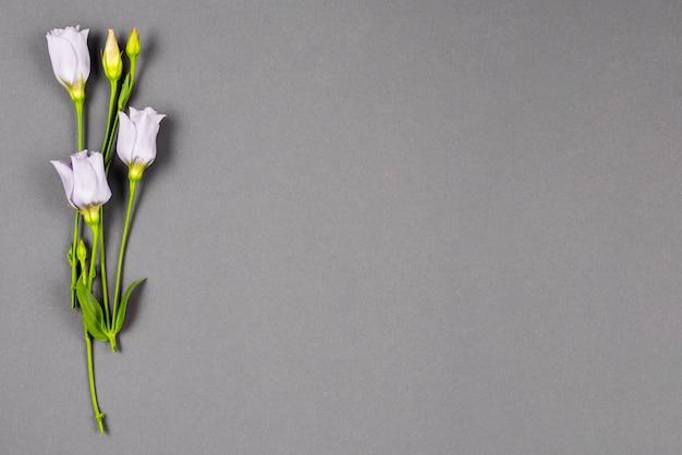 Flores pálidas colocadas verticalmente à esquerda