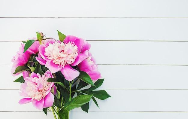 Flores peônias em um fundo branco. foco seletivo.