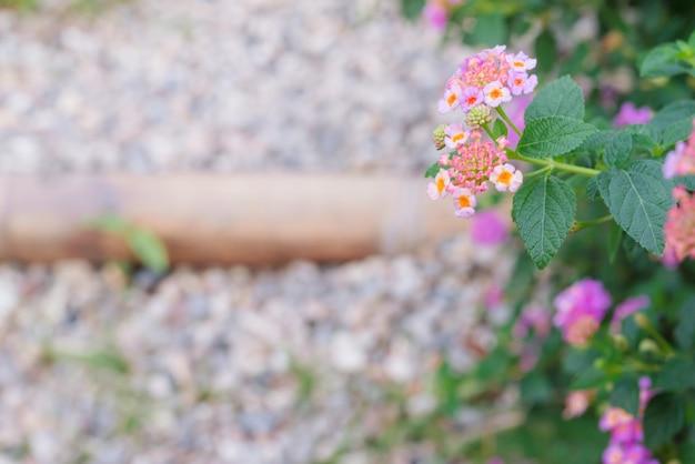 Flores pequenas com a passagem do trajeto do seixo como o fundo.