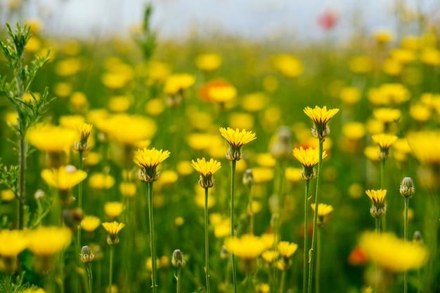 Flores pequenas lindas amarelas sobre fundo verde