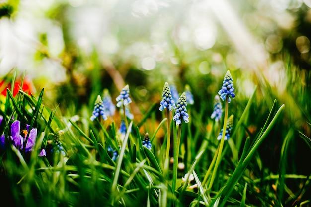 Flores pequenas que crescem fora das ervas