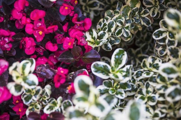 Flores perto de plantas verdes e brancas