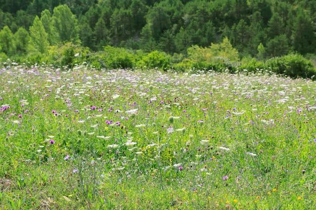 Flores prado campo ao ar livre primavera natureza