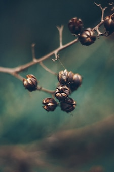 Flores que desabrocham em um galho