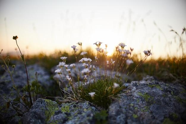 Flores raras da montanha e plantas que crescem na encosta das montanhas do cáucaso