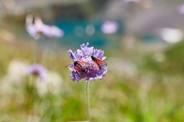 Flores raras da montanha e plantas que crescem na encosta