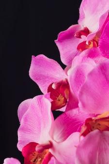 Flores rosa aromáticas frescas surpreendentes