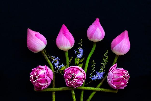 Flores rosa arranjo de lótus estilo plano em preto