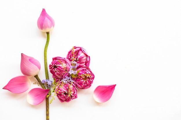 Flores rosa arranjo de lótus plano plano estilo cartão postal