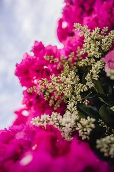 Flores rosa com folhas verdes