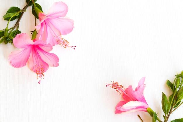 Flores rosa hibisco arranjo plano plano estilo cartão postal